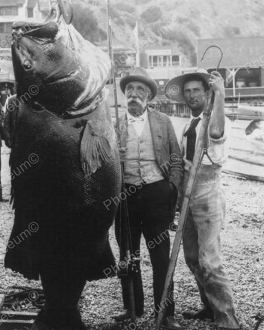 Black Sea Bass World Record Weight 384 Pounds Vintage 8x10 Reprint Of Old Photo