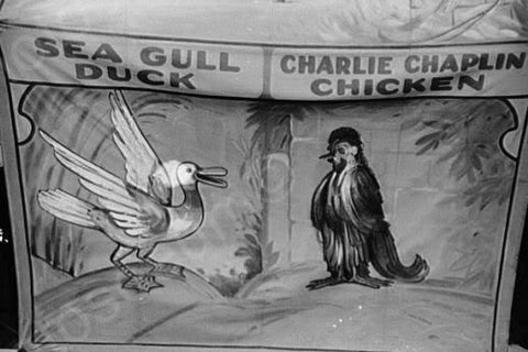 Vermont Sideshow Sea Gull Duck 1940s 4x6 Reprint Of Old Photo