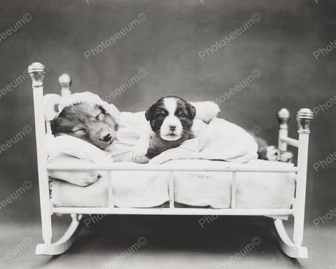 Dogs In Bed 8x10 Reprint Of Old Photo - Photoseeum