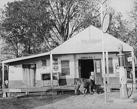 Cow At Esso Gas Station & General Store 8x10 Reprint Of Old Photo
