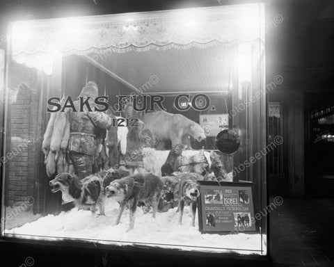 Saks Fur Co Window Wolves & Bear Growl 8x10 Reprint Of Old Photo