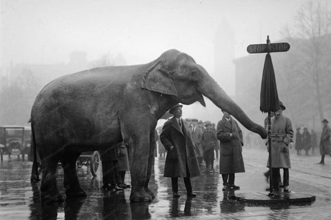 Circus Elephant Directs Traffic 1930s 4x6 Reprint Of Old Photo
