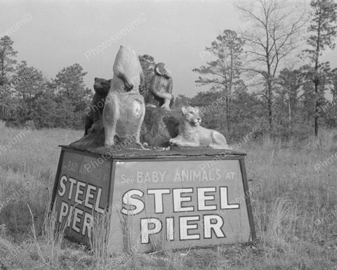 Baby Animals Steel Peer Sign 1938 Vintage 8x10 Reprint Of Old Photo - Photoseeum