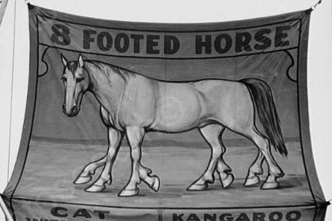 Vermont Sideshow 8 Footed Horse 1940s 4x6 Reprint Of Old Photo