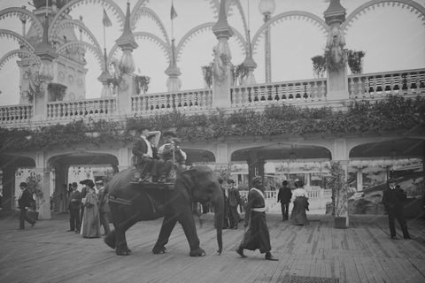 Coney Island NY Elephant Ride 1900s 4x6 Reprint Of Old Photo - Photoseeum