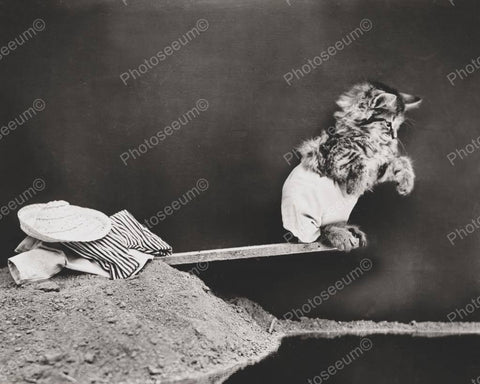 Cat Diving 8x10 Reprint Of Old Photo