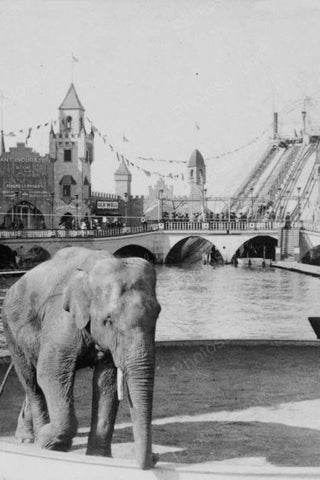 Coney Island Elephant at Luna Park 1900s 4x6 Reprint Of Old Photo