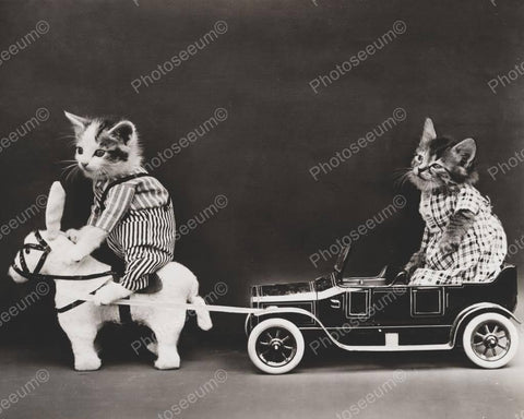 Cat Riding Donkey Car 1914  8x10 Reprint Of Old Photo