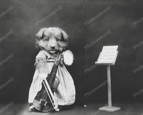 Cute Dog Playing Violin Vintage 8x10 Reprint Of Old Photo
