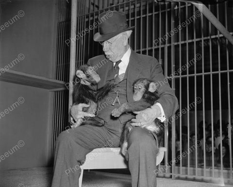 Baby Chimpanzees On Older Man's Lap 8x10 Reprint Of Old Photo