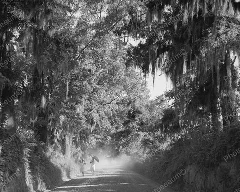 Country Road Dust From Car 1940 Vintage 8x10 Reprint Of Old Photo