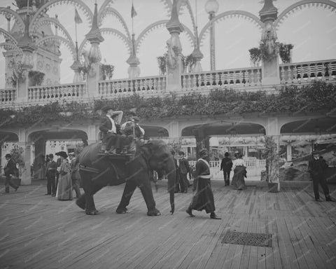 Coney Island Elephant Rides 1900s 8x10 Reprint Of Old Photo
