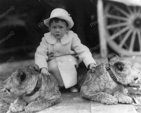 Victorian Tot Sits Between Live Lions! 8x10 Reprint Of Old Photo - Photoseeum
