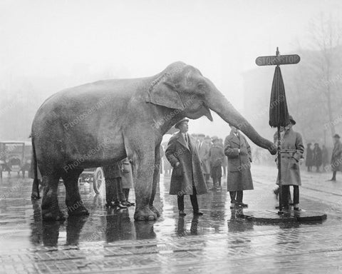 Circus Elephant Directs Traffic 1930s 8x10 Reprint Of Old Photo