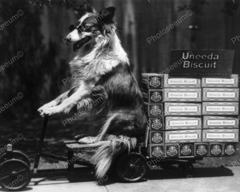 Collie Dog Rides Uneeda Biscuit Wagon 8x10 Reprint Of Old Photo