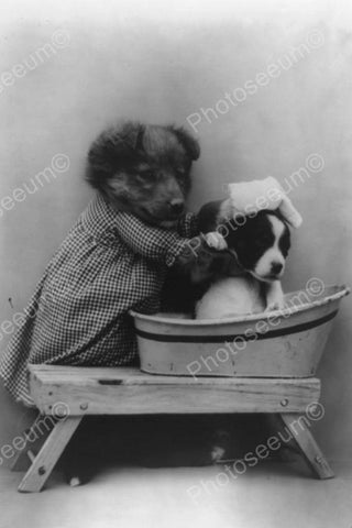 Adorable Dog Gives Puppy A Bath! 1900s 4x6 Reprint Of Old Photo