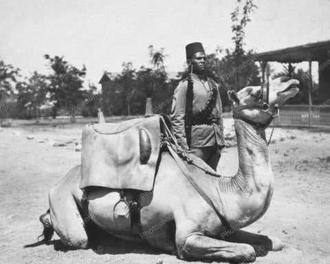 Camel Soldier In British Army 1920s 8x10 Reprint Of Old Photo