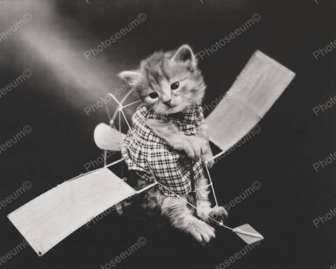 Cat Ready For Flight 8x10 Reprint Of Old Photo