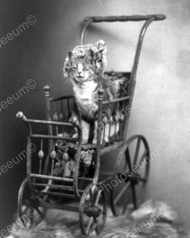 Cat Sitting In Victorian Brass Carriage 8x10 Reprint Of Old Photo