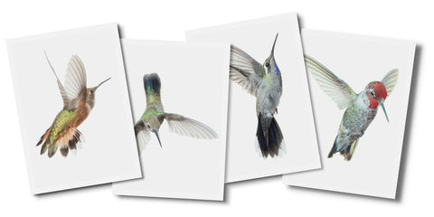 Wild Birds Flying Card Sets