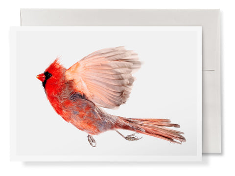 Wild Birds Flying Cards