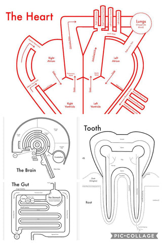 Archie's Press- 8x8 Anatomy Prints