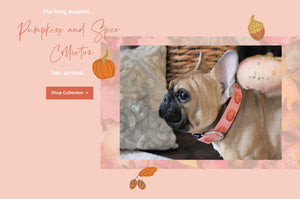 The Pumpkins and Spice Fall Collection announced on a warm pink background with acorns, pumpkins, and leaves.