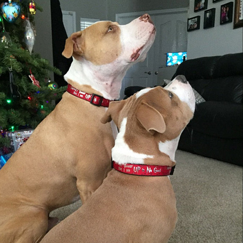 Two Pit Bulls wearing their Up to No Good Dog Collars by a Christmas tree.