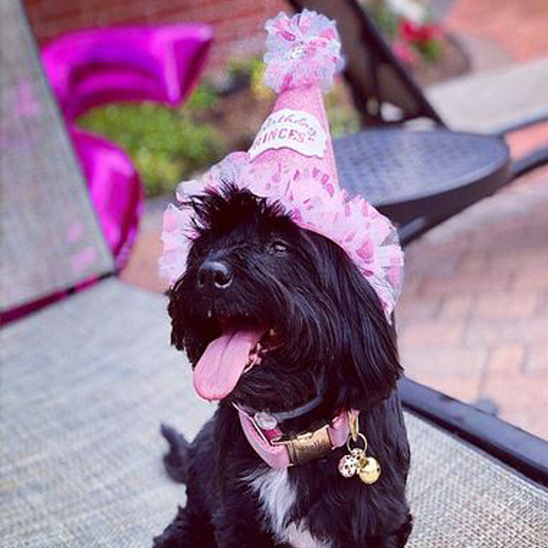 Black Terrier wearing a pink velvet dog collar and pink party hat