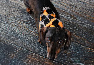 Black Cats Halloween Dog Bandana, Over the Collar