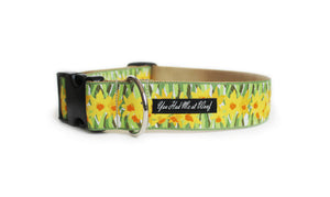 Daffodils in the Spring Dog Collar