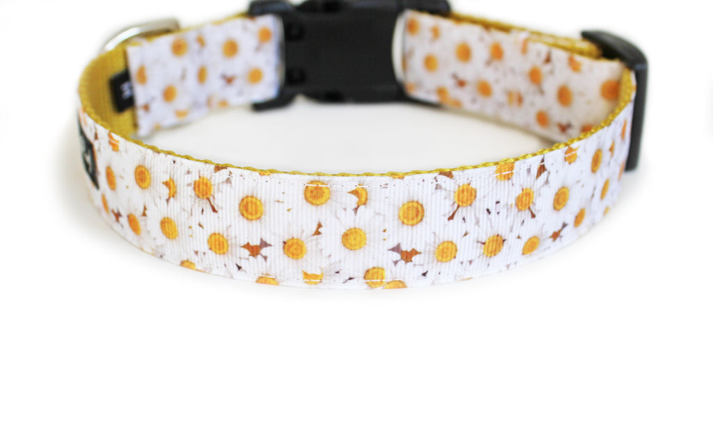 The back the Daisy Dog Collar, displaying the pattern repeating itself along the length of the collar.