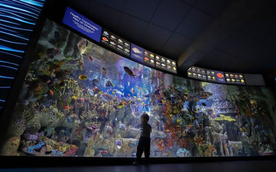 "Take The Kids On A Virtual ""Field Trip"" To The New England Aquarium"
