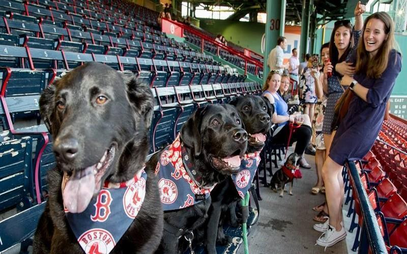 6 Ways Dogless Dog Lovers Can Get Their Puppy Fix In Boston
