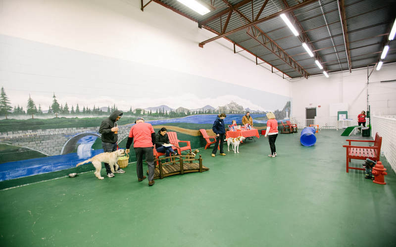 When The Weather Is Extreme, Exercise Your Pup At This Indoor Dog Park
