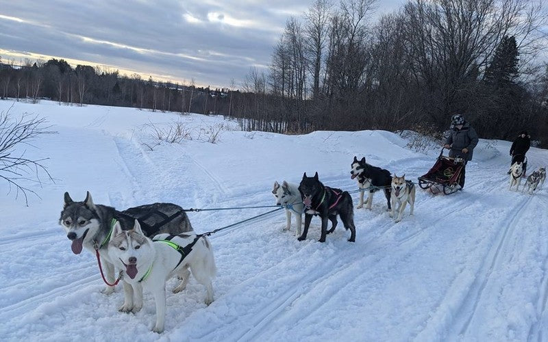 Maine Resident Delivers Groceries To Neighbors By Dogsled
