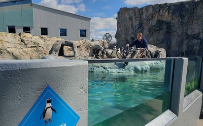 Mystic Aquarium Offers 24 Hour Live Stream Of Adorable Penguins