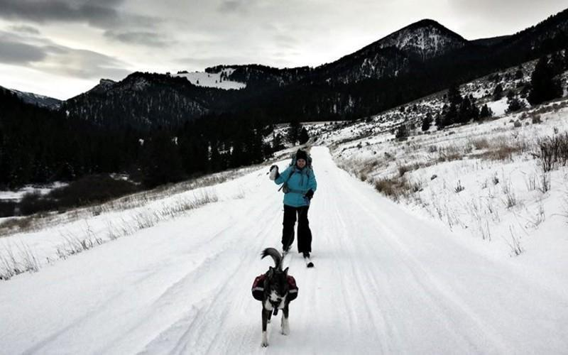 Try Skijouring With Your Dog In MA's Corner Of The Green Mountains