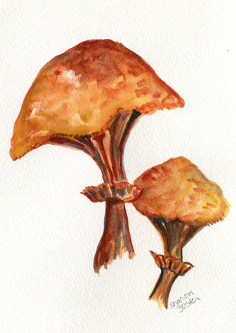 Portobello Mushrooms watercolors paintings original 5 x7 mushroom art, original watercolor painting of portobello mushrooms, kitchen decor