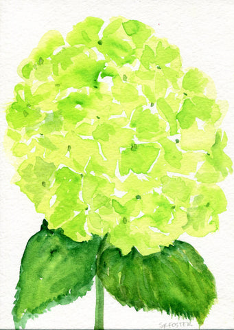 Hydrangea watercolor painting original  5 x 7 Lime Green flower art, original hydrangeas painting, hydrangea watercolors,  flower painting