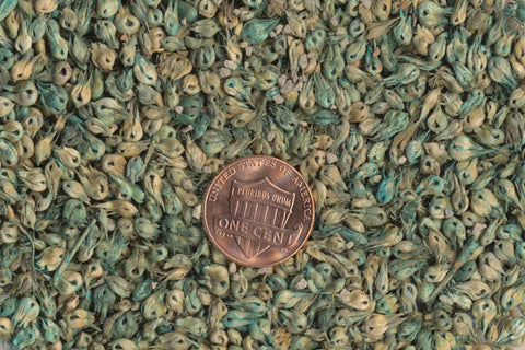 Buy Buffalo Grass Seeds Online in India, Hyderabad