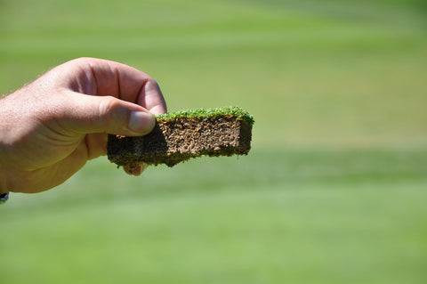 Bentgrass Seeds - treekart  - 1