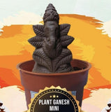 Mini Plant Ganesh
