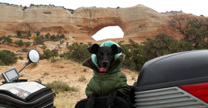 T-bags Motorcycle Pet Carrier