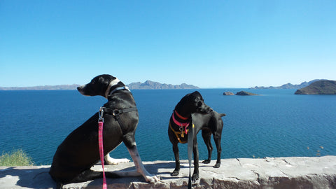 Weeti and Shadow on the Sea of Cortez