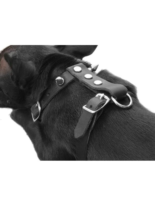 Black Leather Spiked Dog Collar Lead-COSTUMEISH