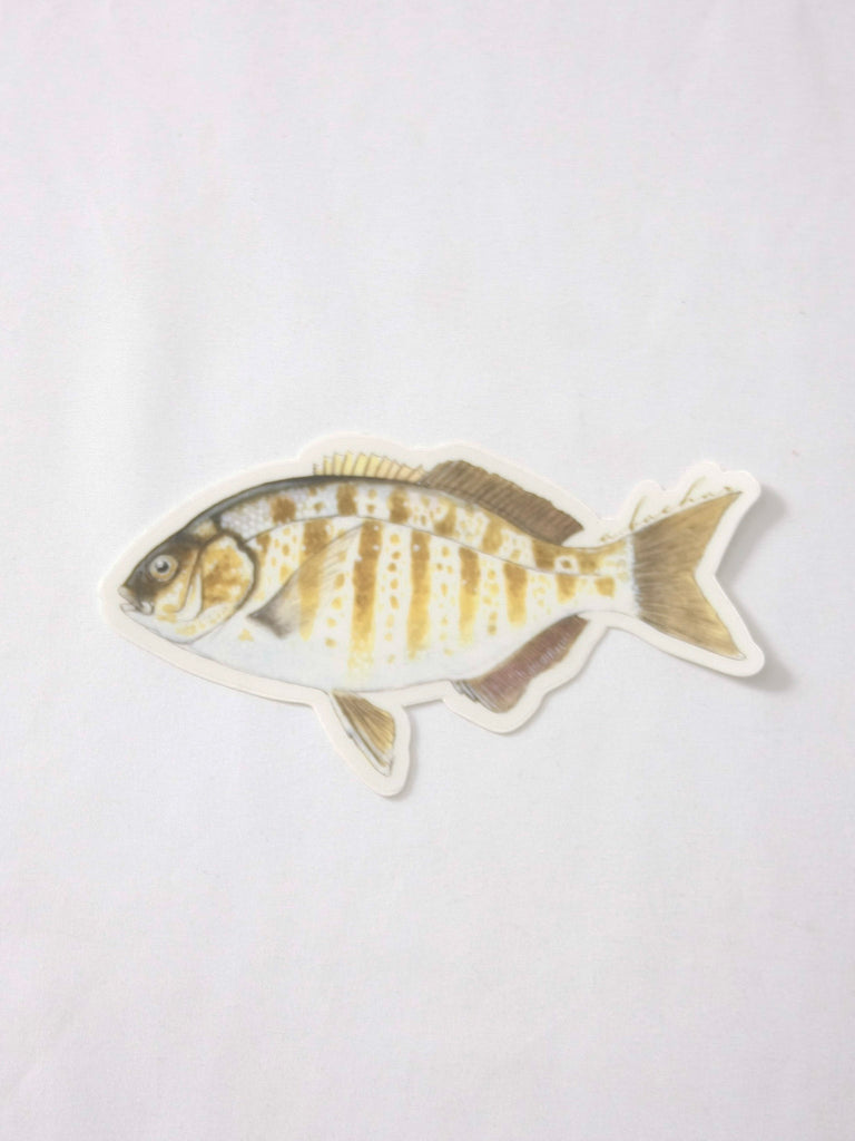 Abachar Barred Perch Sticker