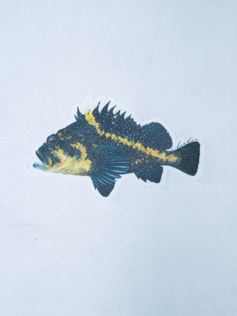 Abachar China Rockfish Sticker