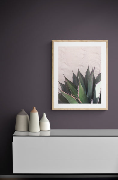 Succulents on Pink, Plants on Pink Photography, Botanical Art Print
