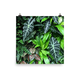 Wall of Tropical Greenery Print
